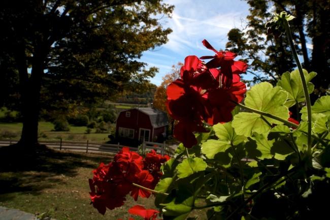 bedlam farm geranium